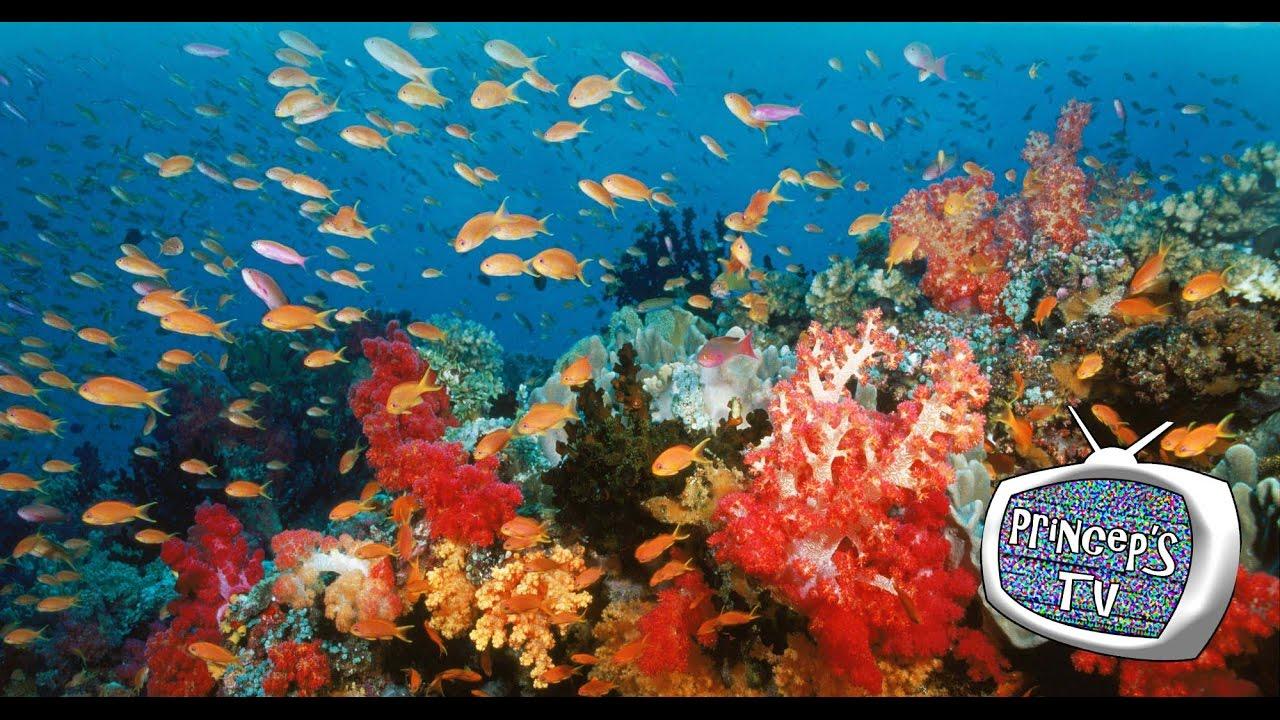 Acquario relax 1 acqua dolce pesci tropicali e rossi for Acqua acquario