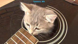 Распаковка и обзор струн для гитары ROTOSOUND