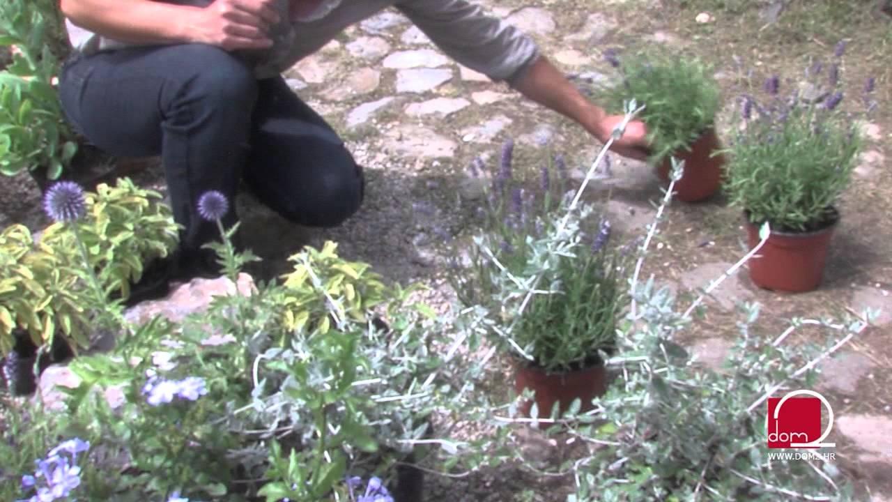 Kako urediti mediteranski vrt - YouTube