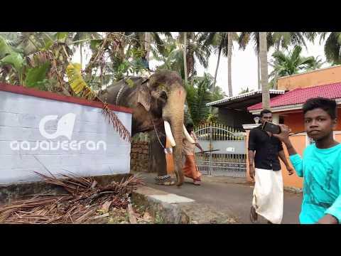 Thechikottukavu Ramachandran 4K VIDEO