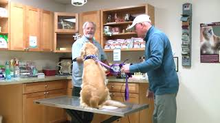 Veterinary Clinics & Hospitals in Duncannon PA, details at YellowPages.com
