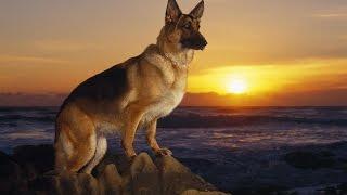 Лапу дай. Слайд-шоу про собак. Сёстры Толмачёвы