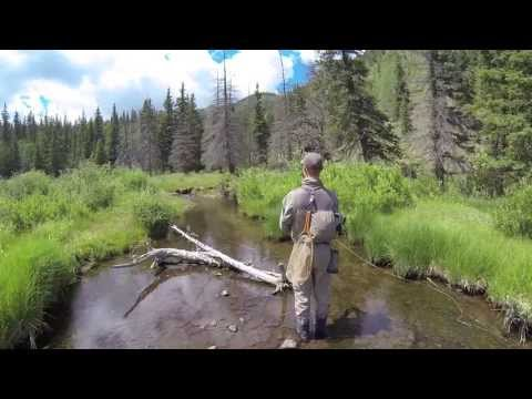 Rio Grande Cutthroat Trout Fly Fishing