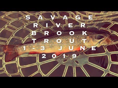 SAVAGE RIVER BROOK TROUT BONANZA!  1-3 JUNE 2019