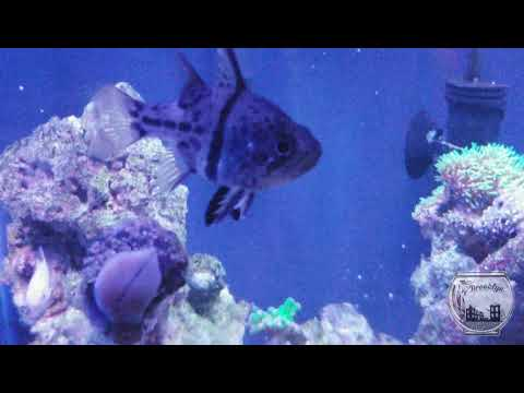 Saltwater Fish Only Vs. Reef Tank