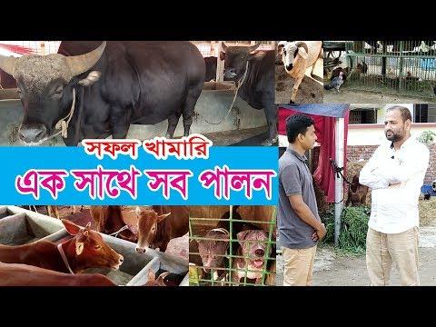 সফল খামারি এক সাথে সব পালন | Desi Murgi | Goat Farm | Desi Gorur Khamar | Dairy Farm In Bangladesh