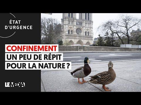 CONFINEMENT: UN PEU DE RÉPIT POUR LA NATURE ?