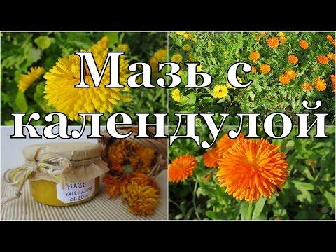 Отличная МАЗЬ с календулой своими руками // Calendula ointment | лекарственная | применение | календулы | календула | свойства | лечебные | цветы | лечен | мазь | крем