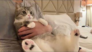 高級ホテルで猫と一緒にする夜更かしは最高です。