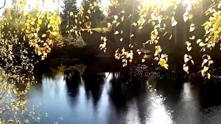 видео река Берёза