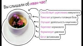 Иван чай — польза и вред РАЗВЕИВАЕМ МИФЫ