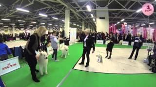 Клуб Ристикент, Невский Победитель 2014 / кубок президента РКФ