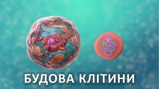 Будова клітини [Nucleus Medical Media]