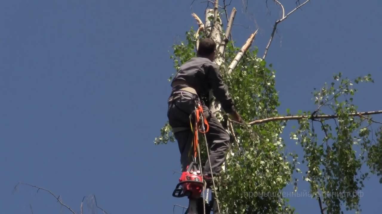 Спил и обрезка деревьев альпинистами. - YouTube