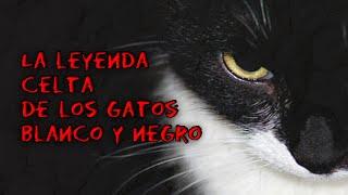 Leyenda Celta de los Gatos Blanco y Negro