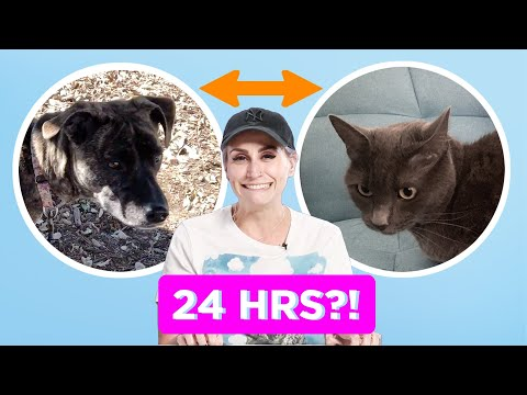 Dog Person And Cat Person Swap Pets For A Day
