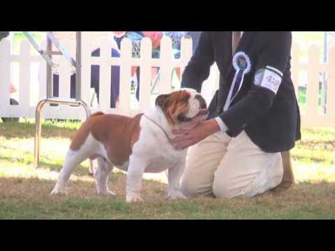 Richmond Dog Show 2016 - Utility group FULL