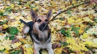 Львівська обл. Мріє про дім з подвір*ям. Собака в добрі руки.