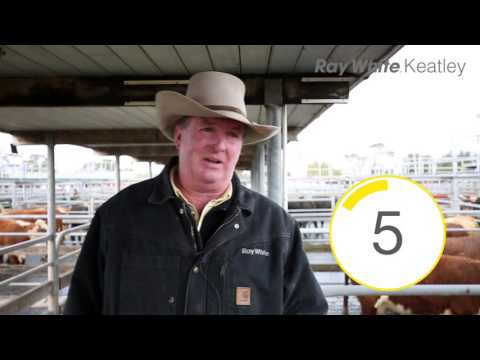 Mount Gambier Cattle Market Snapshot - 6.7.16