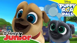 Puppy Dog Pals | Lots of Songs | Disney Junior UK