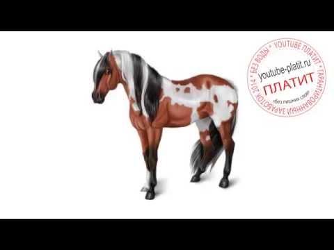 Картинки лошади нарисованные Как научиться рисовать лошадь ...