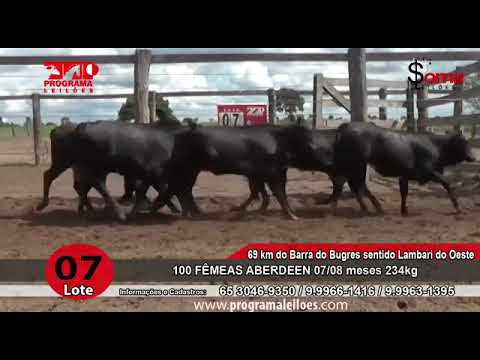 LOTE 07