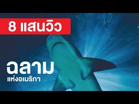 สารคดี สำรวจโลก ตอน ฉลามแห่งอเมริกา - อย่าละสายตา เพชฌฆาตอาจจู่โจมคุณโดยไม่คาดคิด