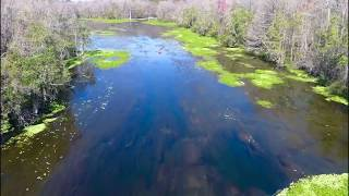 The Blue Hole Blue Springs Wacissa Florida Phantom 4 Pro Drone flight