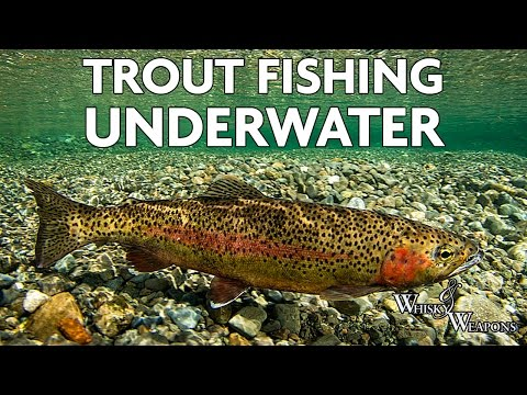 Trout Fishing Derwent Reservoir With Whisky & Weapons - Under Water Rainbow Trout With Power Bait