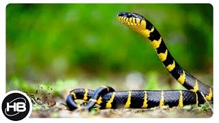 10 Самых Потрясающе Красивых Змей на Планете