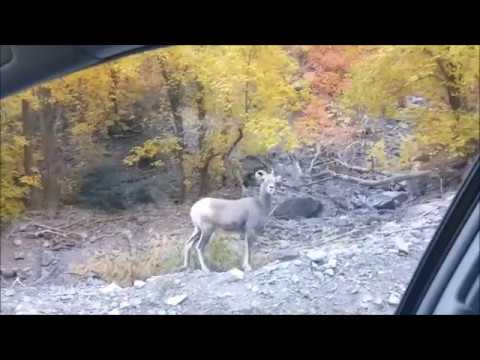 Alpine Loop American Fork Utah October 2017