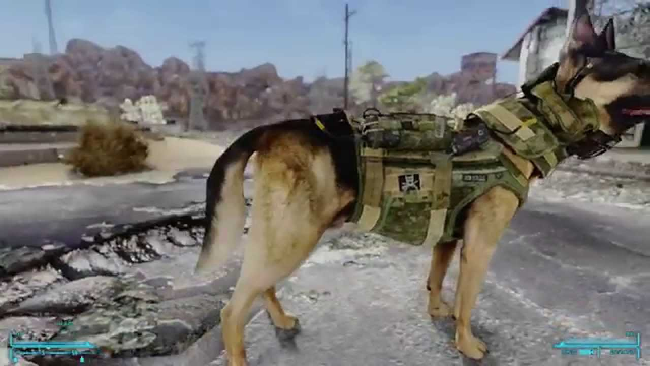 Fallout New Vegas Where To Get A Dog