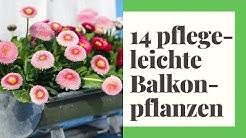 14 pflegeleichte Balkonpflanzen - für einen sonnigen Standort