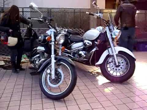 Silvertail blackjack vn 800