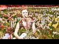 Daffodil Lament Music Video The Cranberries No Need To Argue Album mp3
