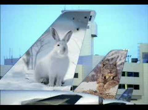 """Frontier Airlines """"Penguins"""""""