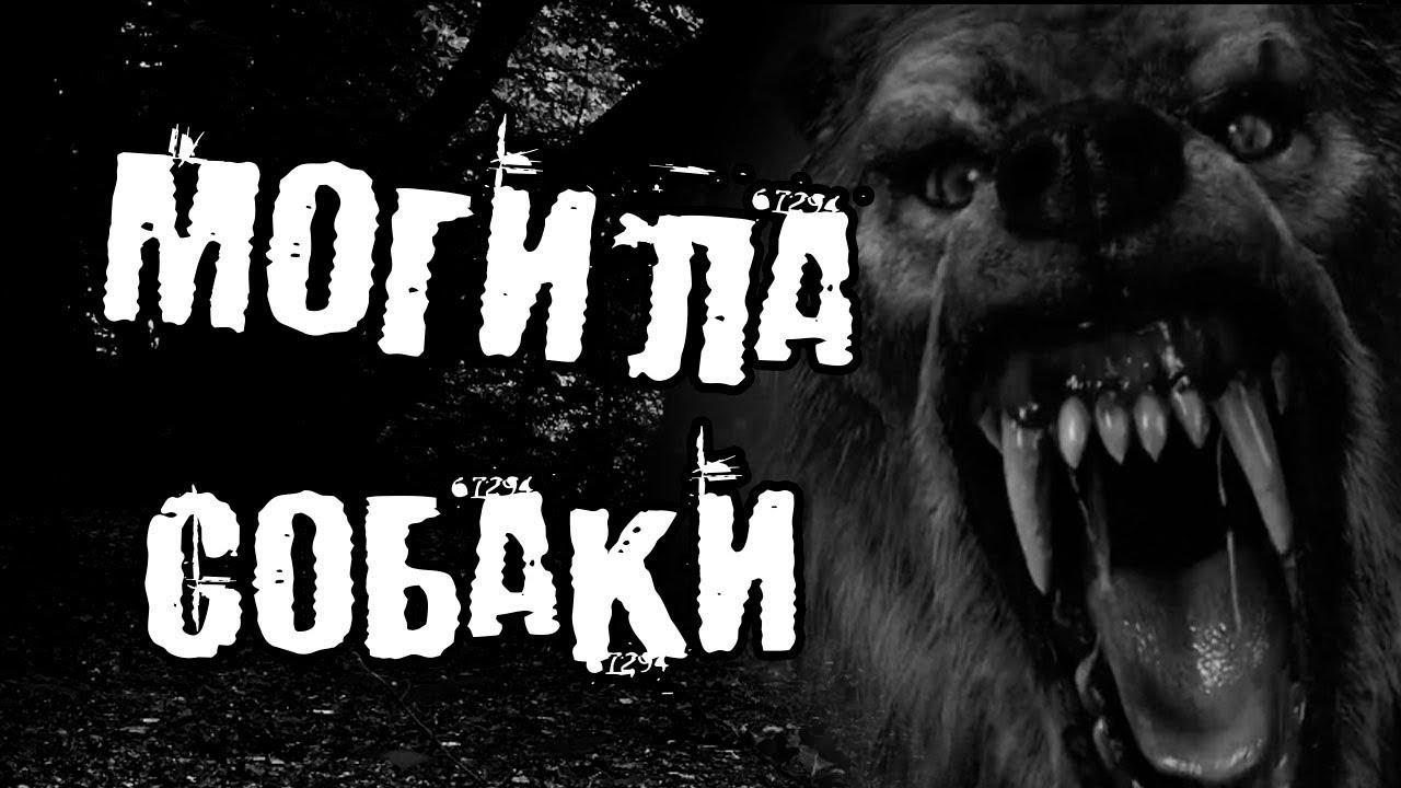Могила собаки - страшная история на ночь