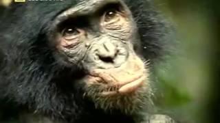 Дикий секс Извращенцы Секс у животных Документальный фильм National Geographic