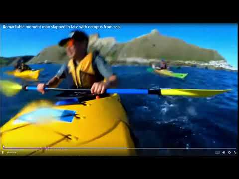 Jeff Stevens - WHAT? A seal throws an octopus at kayaker