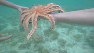 Living in the Philippines Retired Giant Starfish Palawan Philippines Recon Snorkeling Palawan