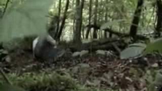 Download Video EVIL INSTINCT ( court métrage - short movie ) MP3 3GP MP4