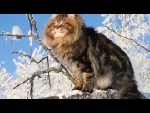 Natural wonders - Siberia