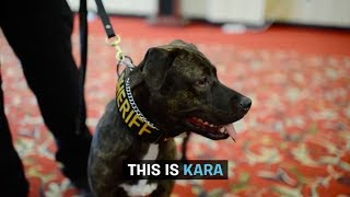 K9 Kara will be protecting communities - even ones that ban dogs la...