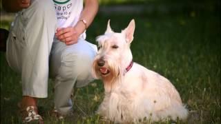 """Как научить собаку команде Аппорт. Дрессировка собак в Новосибирске. Кинологический центр """"БАРС"""""""