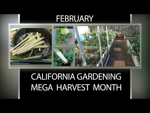 The California Garden in February - Mega Harvest Month!