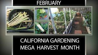 The California Garden in February - Mega Harvest Month!