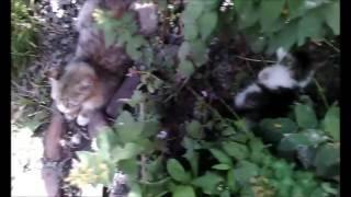 котята нашего двора