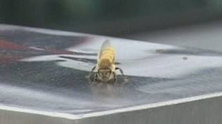 Bee swarms attack motorway toll in China