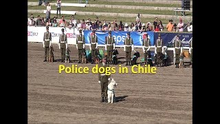 Police dogs in Chile