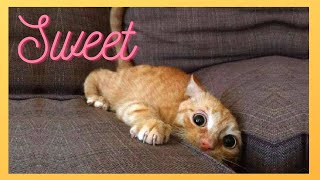 FUNNY ANIMAL VIDEOS COMPILATION | Sweet cats, dogs